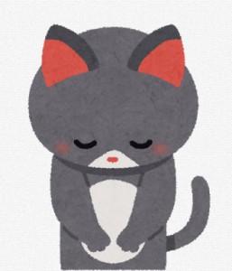 cat apology